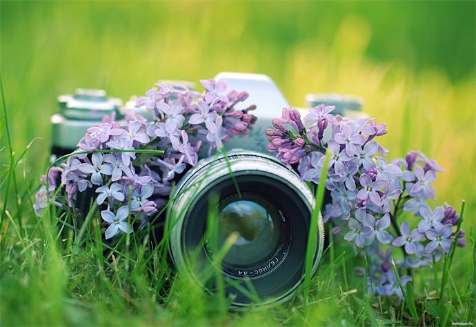 Что означает зеркальный фотоаппарат
