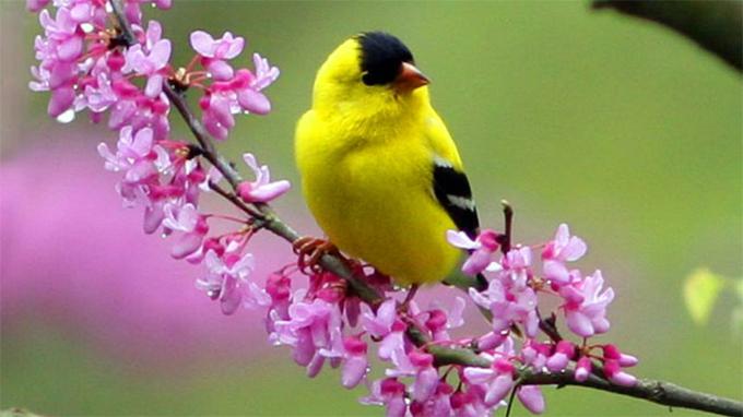 Что фотографировать весной