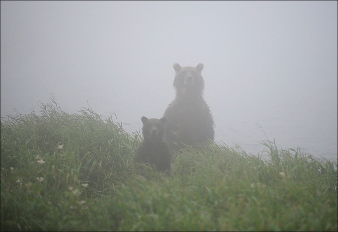 Как фотографировать в тумане