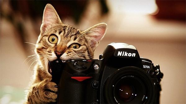 Как сфотографировать кошку правильно