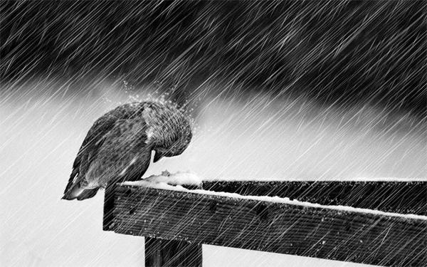 Фотографии в дождь